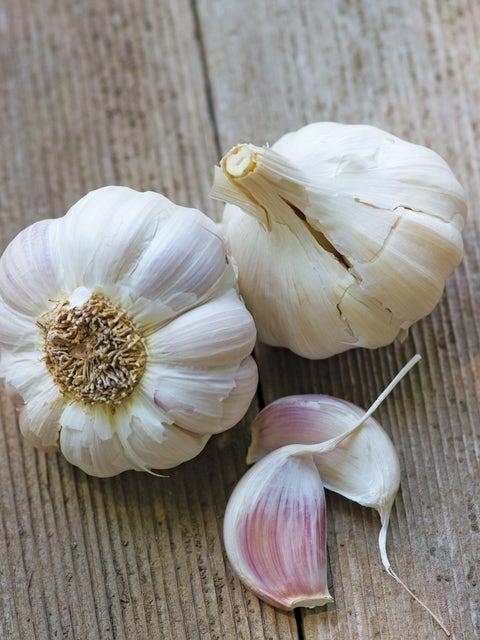 Garlic, Cuban Purple