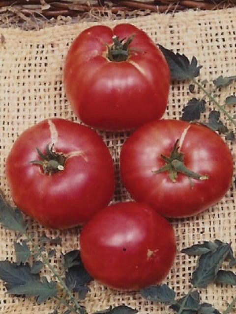 Tomato, German Johnson