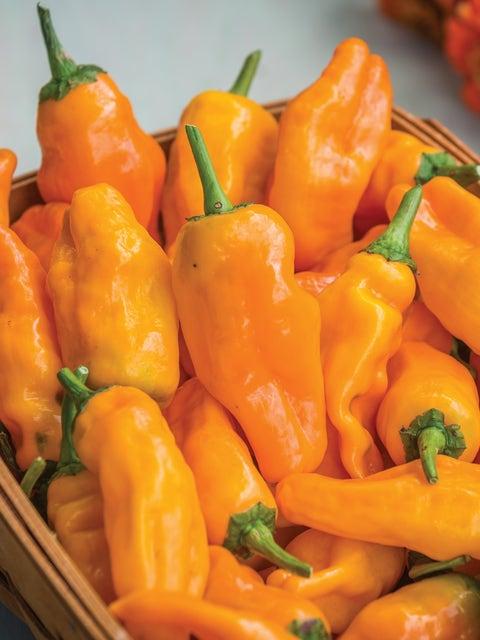 Pepper, Hot, Orange Pepperoncini