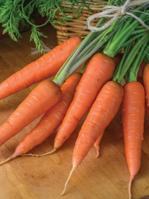 Carrot, Yaya Organic