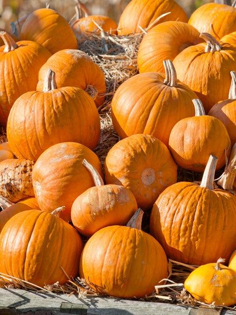 Pumpkin, Cherokee Bush