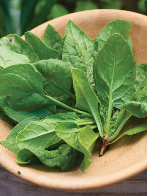 Spinach, Space Hybrid