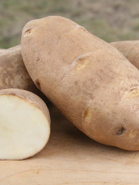 Potato, Russet Norkotah