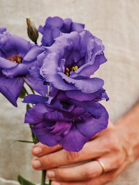 Lisianthus, The Blue Rose®