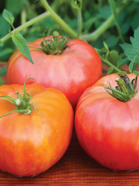 Tomato, Brandywine Red