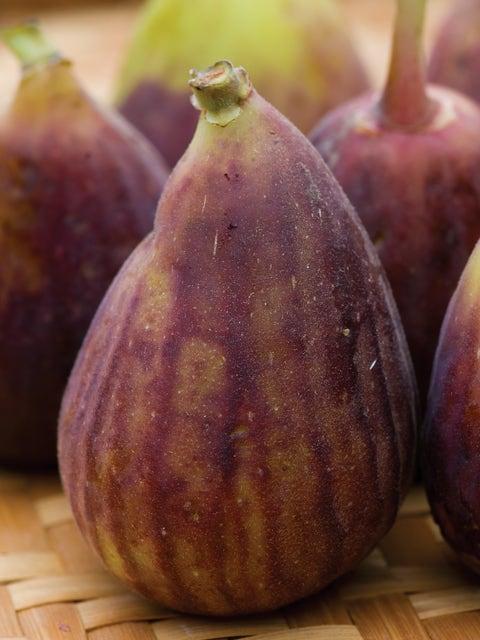 Fig, LSU Purple