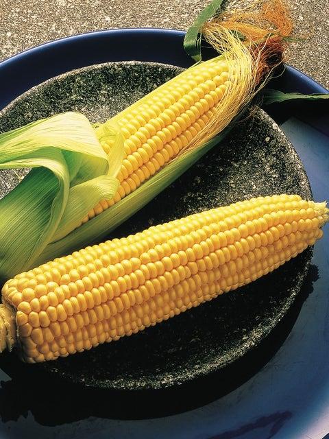 Corn, Illini Xtra Sweet Hybrid