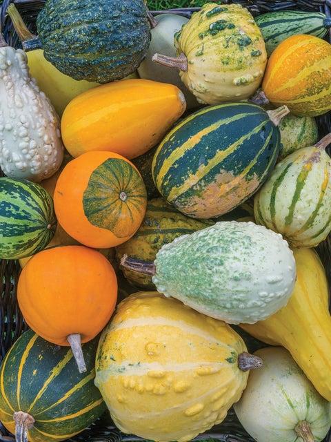 Gourd, Ornamental, Small Fancy Mix