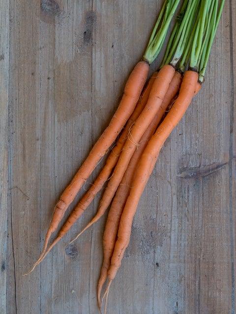 Carrot, Candysnax Hybrid