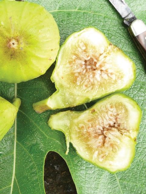 Fig, Lattarula Italian Honey