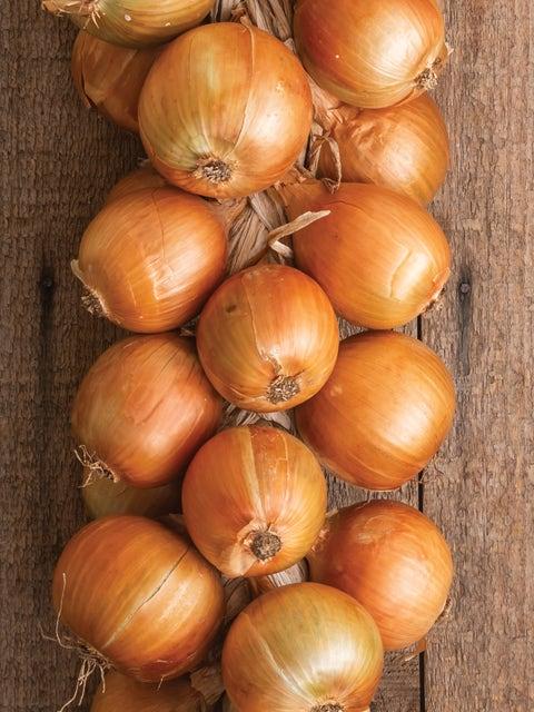 Onion, Patterson Hybrid