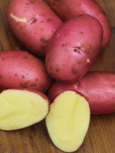 Potato, Red Luna