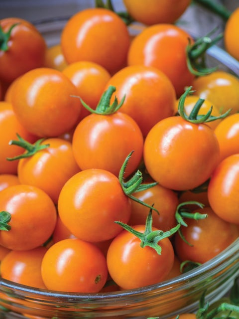 Tomato, Honeycomb Hybrid