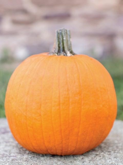 Pumpkin, Baby Wrinkles Hybrid
