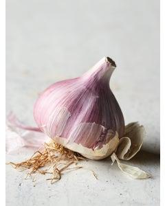 Garlic, Chesnok Red
