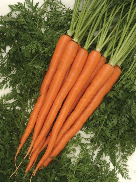 Carrot, Sugarsnax Hybrid