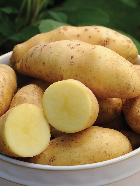 Potato, Princess Laratte