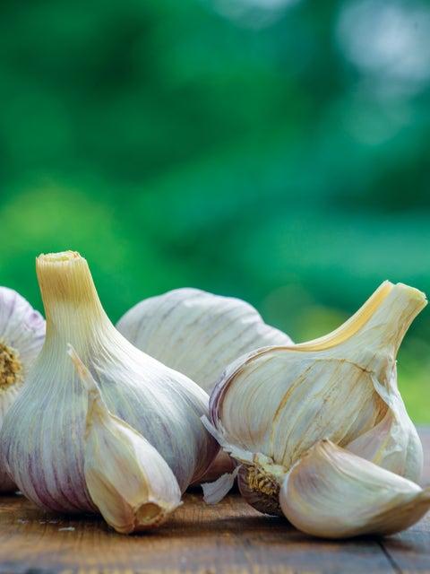Garlic, Texas Rose