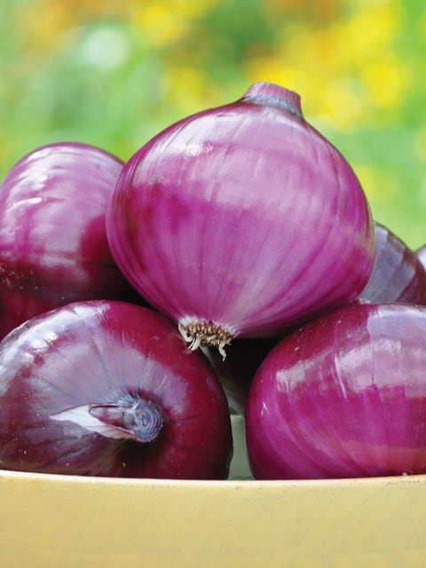 Onion, Red Candy