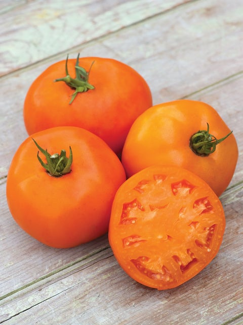 Tomato, Orange Slice Hybrid