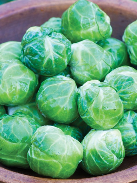Brussels Sprouts, Mighty Hybrid