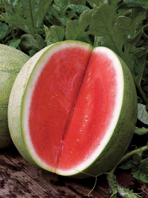 Watermelon Seedless, Big Tasty Hybrid