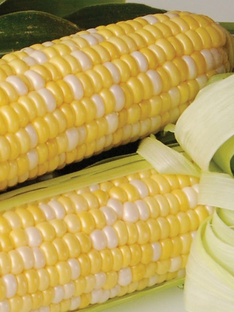 Corn, Sweetness Hybrid