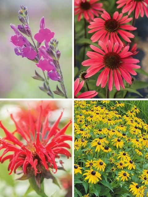 Warm Weather Perennial Garden