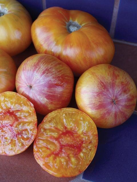 Tomato, Pattys Yellow Striped Beefsteak