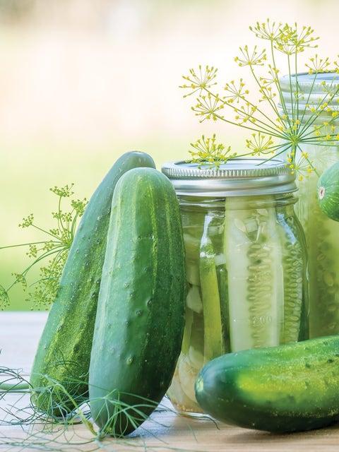 Cucumber, Fresh Pickles Hybrid