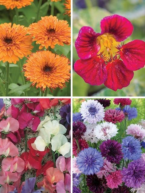 Cool Weather Flower Garden