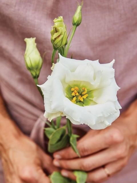 Lisianthus, Cream White
