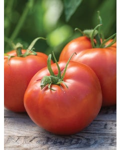 Tomato, Burpees Big Boy® Hybrid