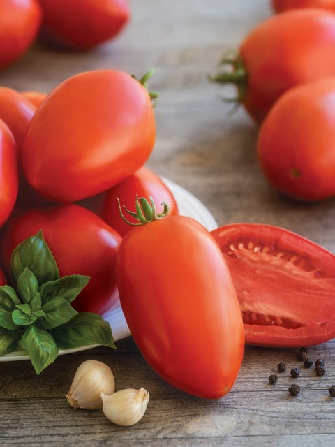 Tomato, Gladiator Hybrid