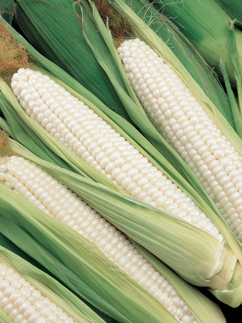Corn, Silver Choice  Hybrid
