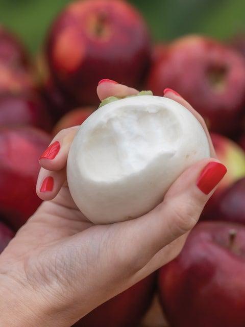 Turnip, Silky Sweet Hybrid