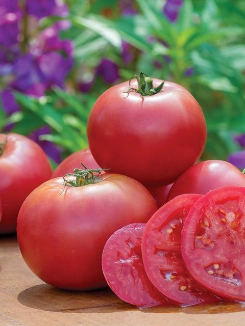 Tomato, Umamin Hybrid