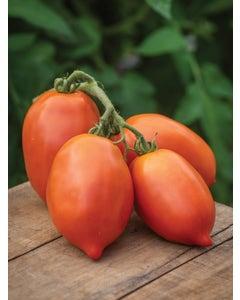 Tomato, Big Mama Hybrid