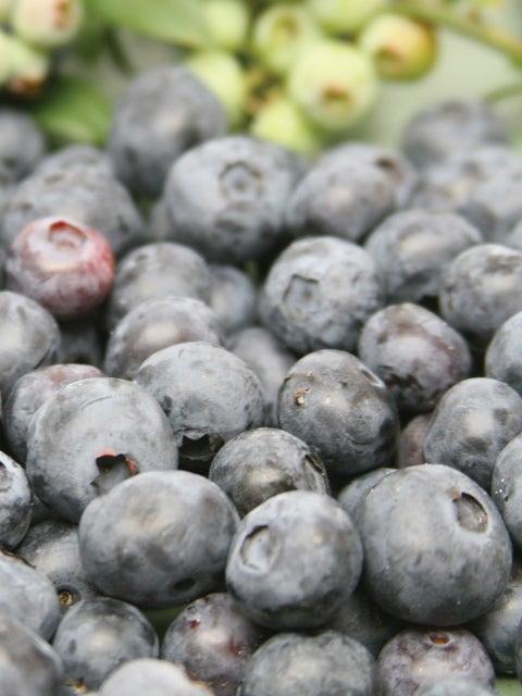 Blueberry, Northblue