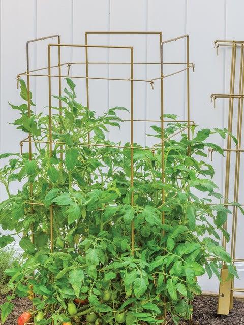 Burpee Titan Tomato Support