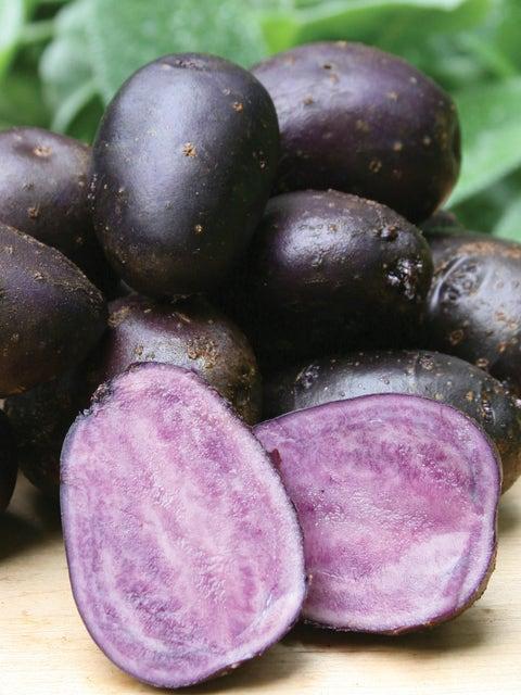 Potato, Purple Majesty