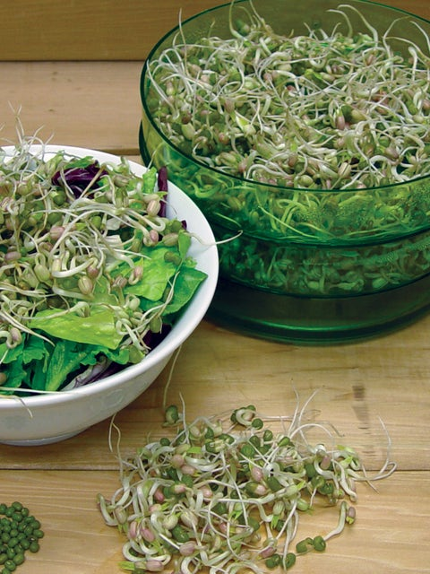 Sprout Seed, Mung Bean
