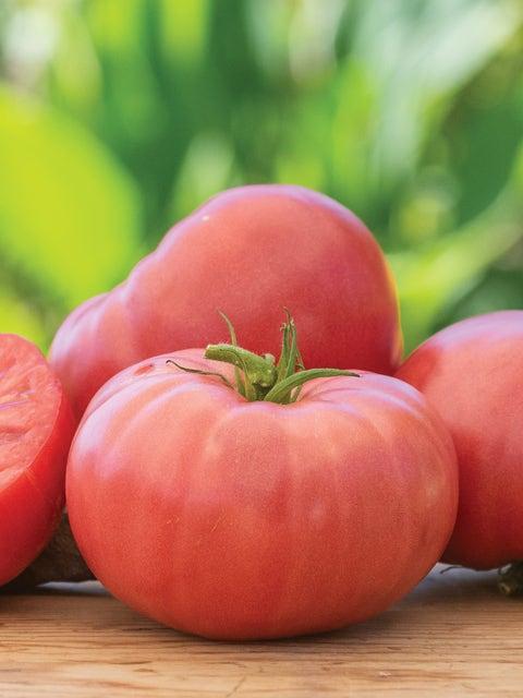 Tomato, Arkansas Traveler