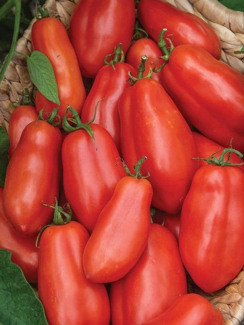 Tomato, San Marzano Organic