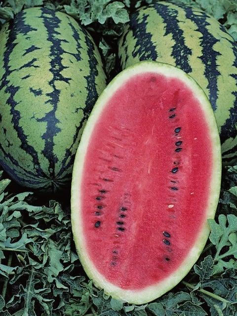 Watermelon, Allsweet Organic