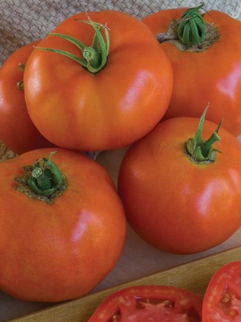 Tomato, Super Beefsteak