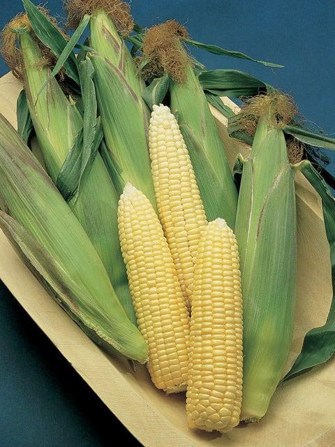 Corn, Early Sunglow Hybrid