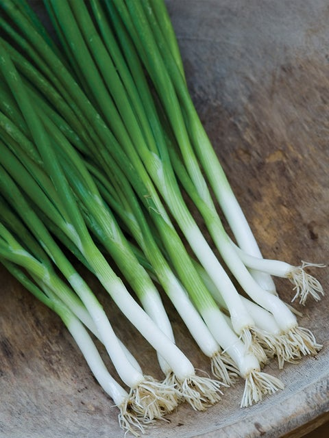 Bunching Onion, Parade