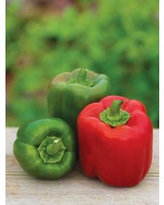 Pepper, Sweet, Candy Apple Hybrid