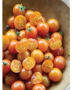 Tomato, Sun Gold  Hybrid